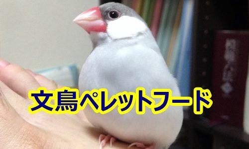 胃腸に優しい文鳥のエサのおすすめ商品4つ
